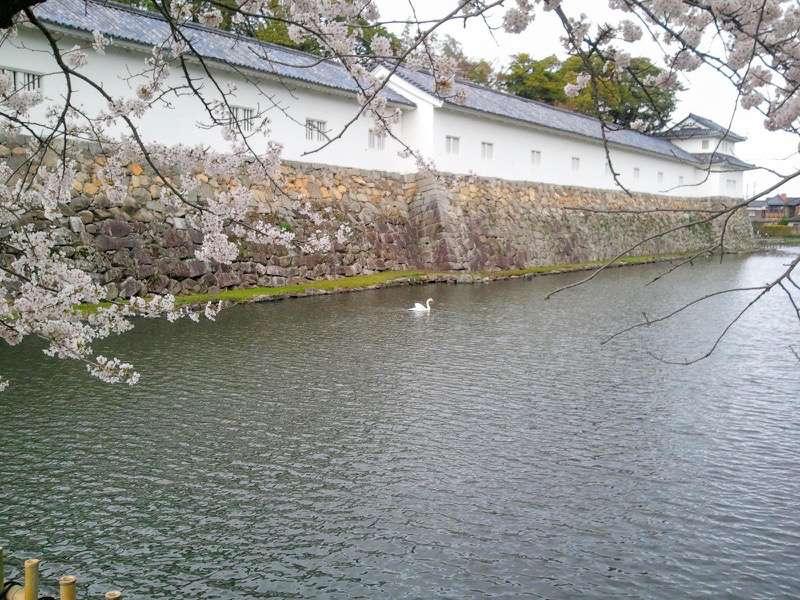彦根城 お堀