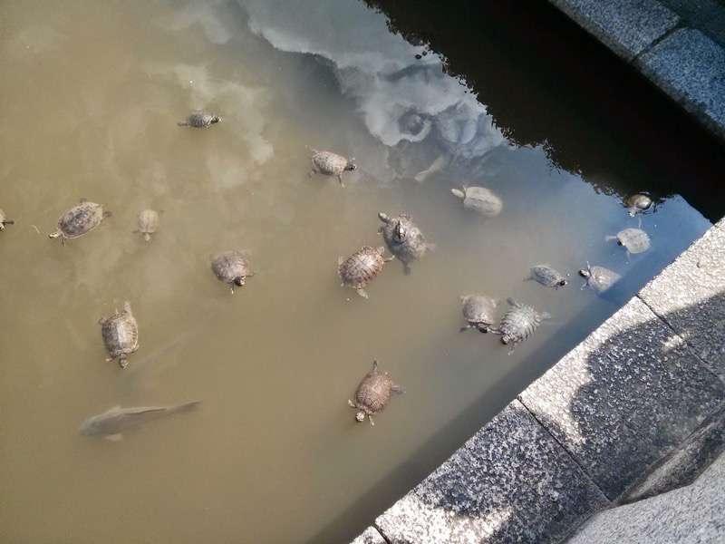 四天王寺 亀の池3