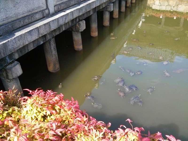 四天王寺 亀の池2