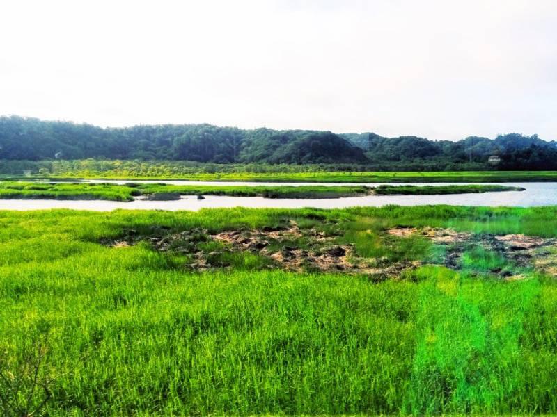 釧路 根室 厚岸湖5