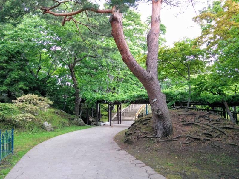 函館公園 園内歩道8