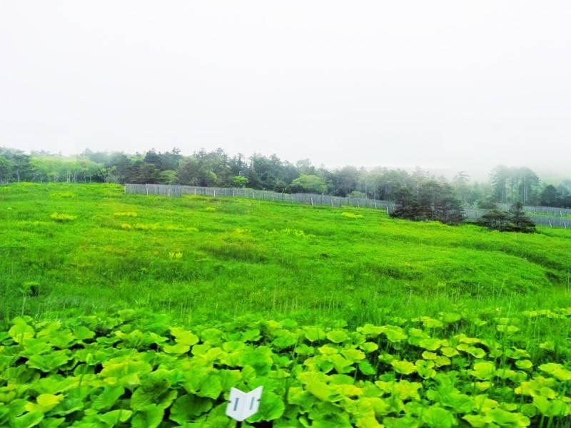 釧路 根室 厚岸 根室間の湿原5