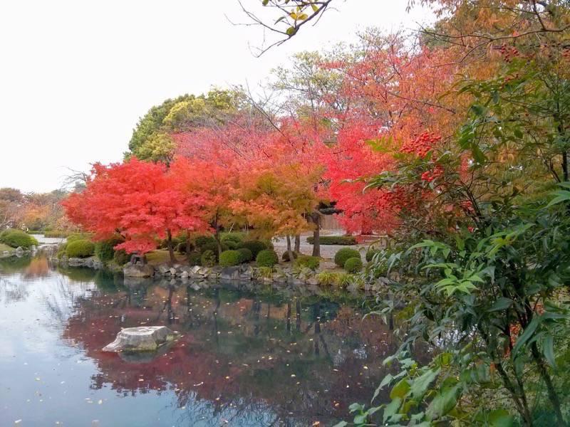 東寺 五重塔前の池2