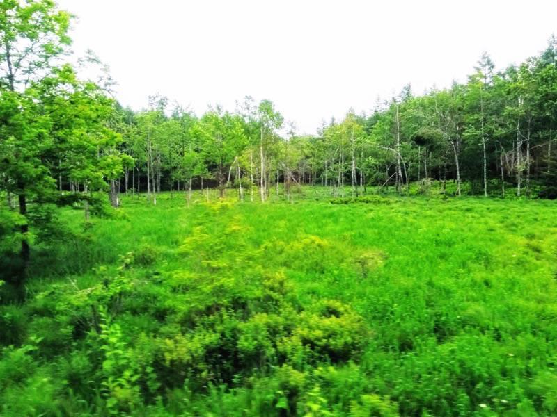 釧路 根室 釧路の湿原