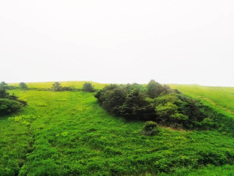 釧路 根室 厚岸 根室間の湿原11