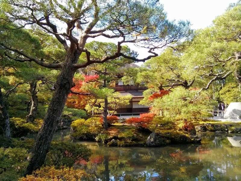 銀閣寺 庭園内の木々2
