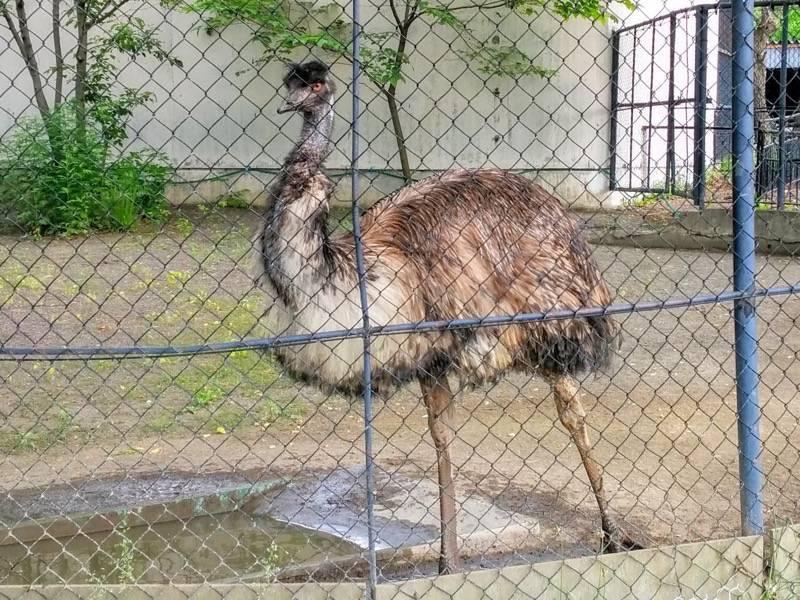 旭山動物園 エミュー