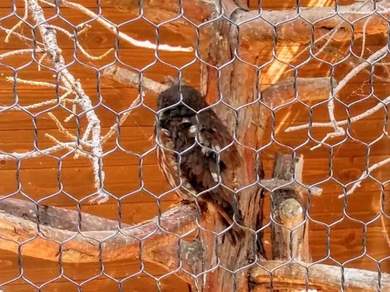 旭山動物園 アオバズク