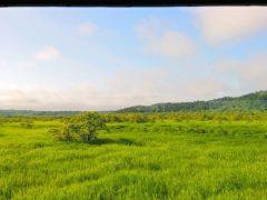 釧路根室間の湿原