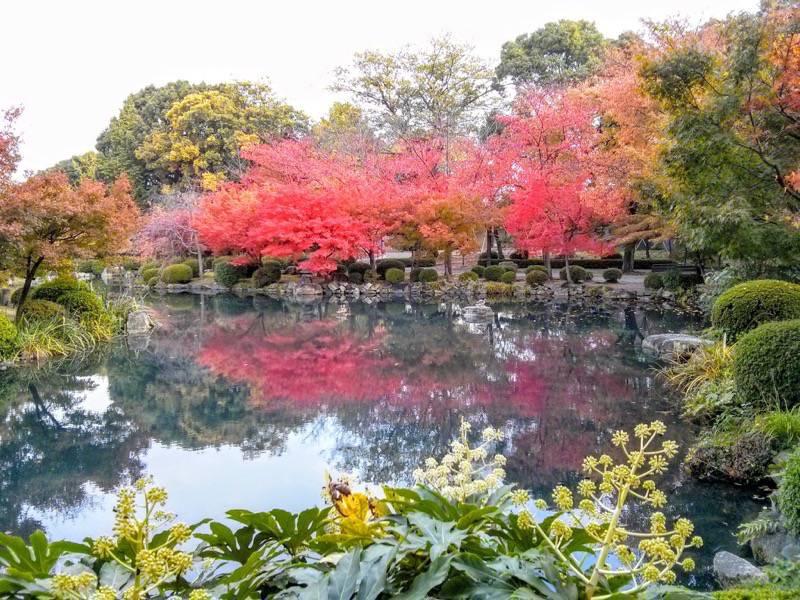 東寺 五重塔前の池1
