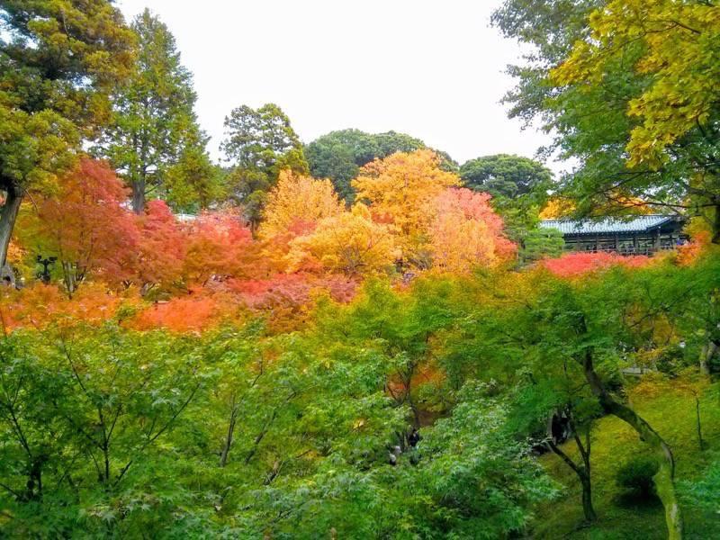 東福寺 臥雲橋から3