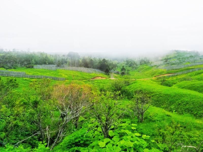 釧路 根室 厚岸 根室間の湿原6