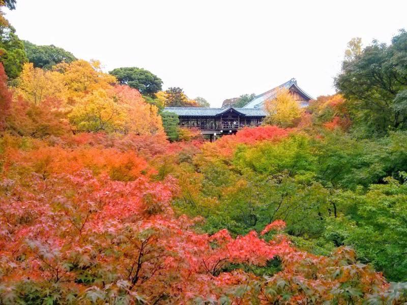 東福寺 臥雲橋から2