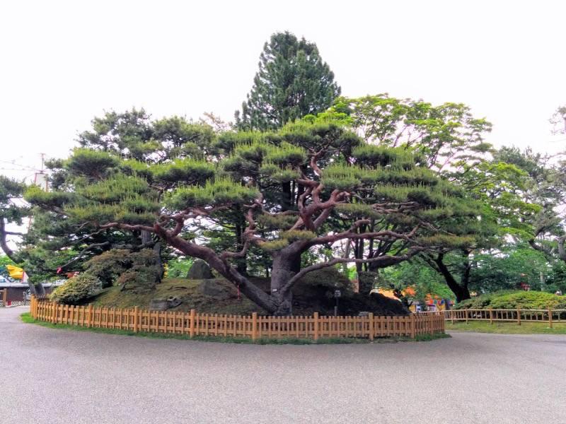 函館公園 鶴亀の水飲場