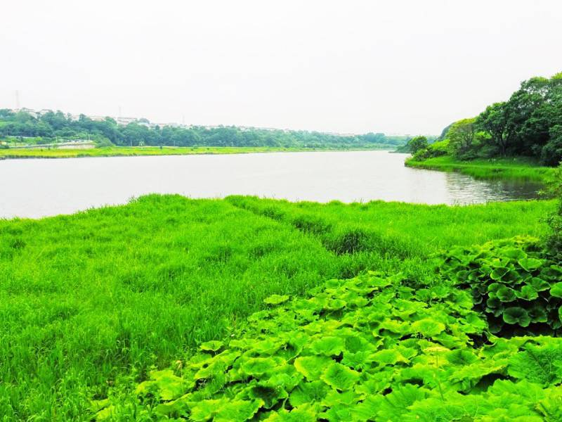 釧路 春採湖4