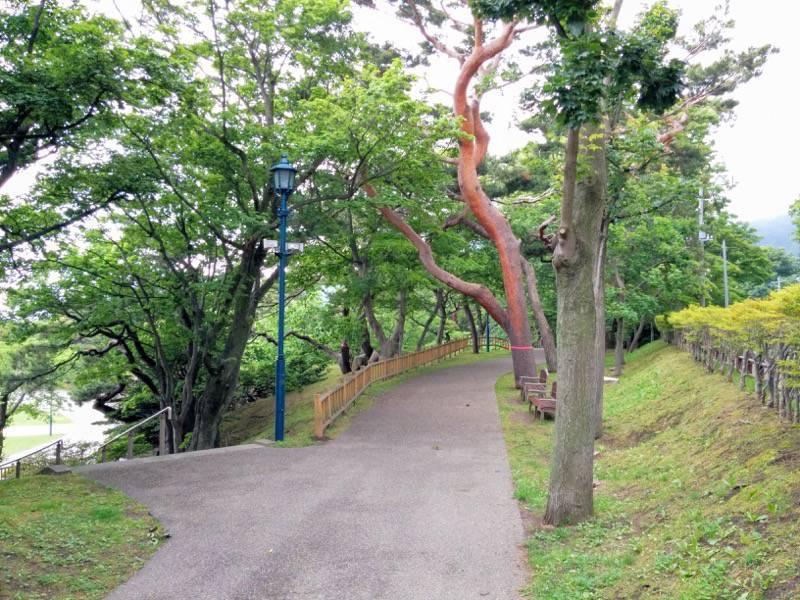 函館公園 園内歩道1