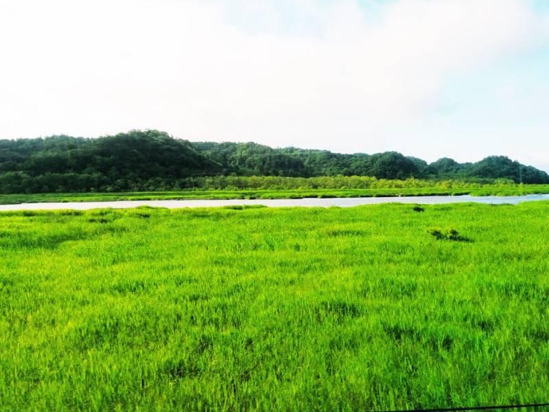 釧路 根室 厚岸湖7