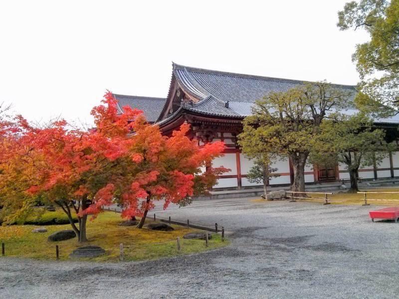 東寺 講堂付近の紅葉