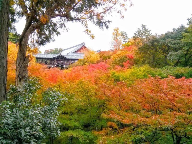 東福寺 臥雲橋から1