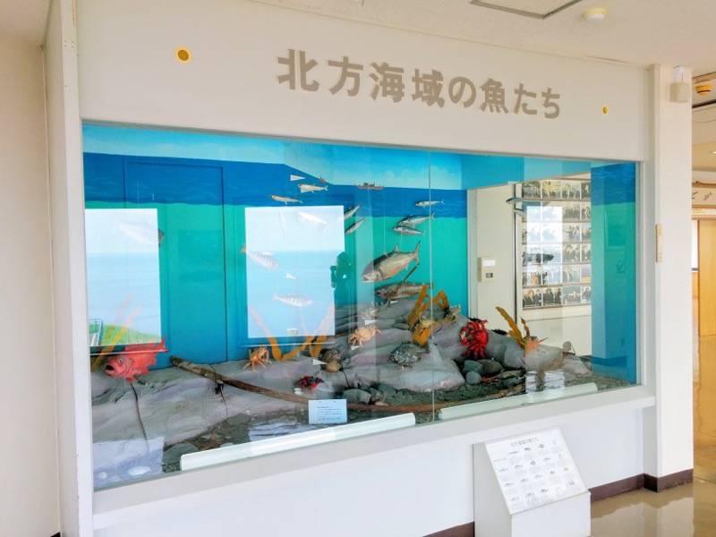 納沙布岬望郷の家 2F北方海域の魚たち