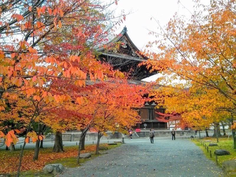 東寺 金堂前の紅葉