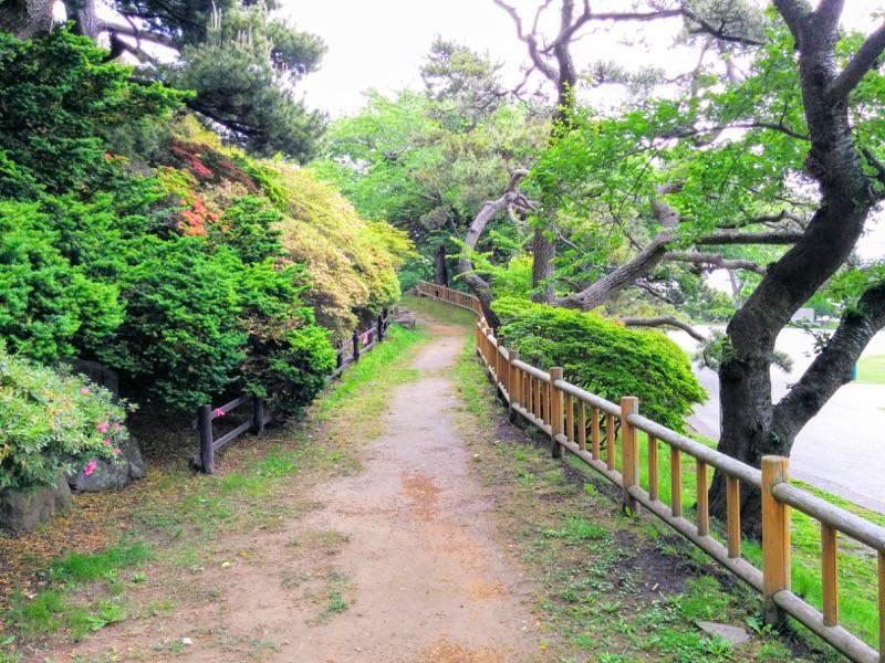 函館公園 園内歩道3