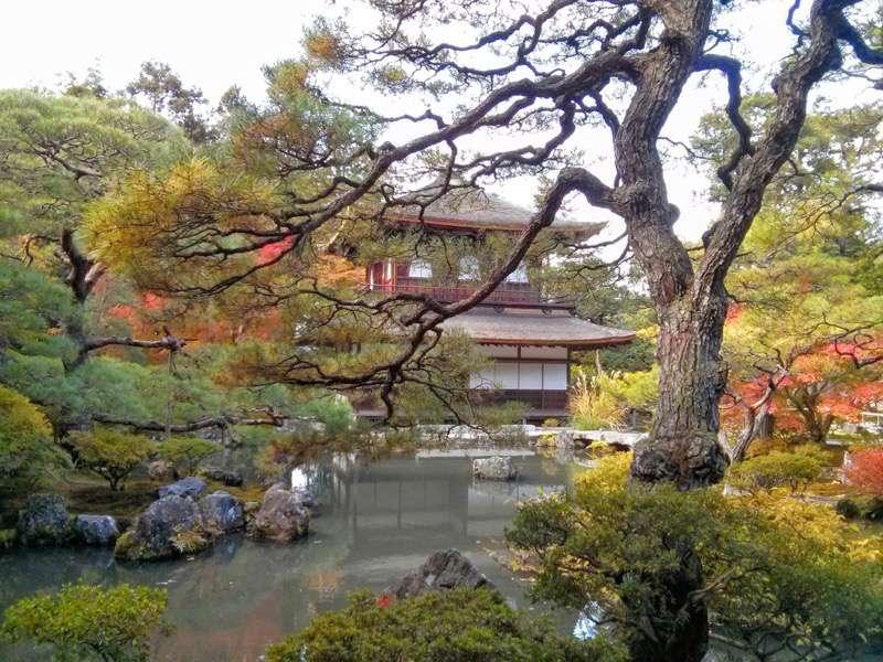 銀閣寺 庭園内の木々3