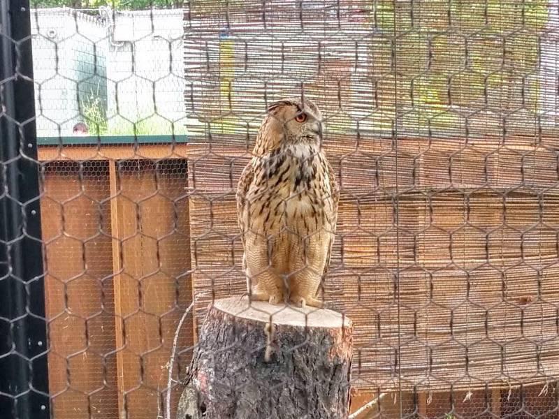 旭山動物園 ワシミミズク