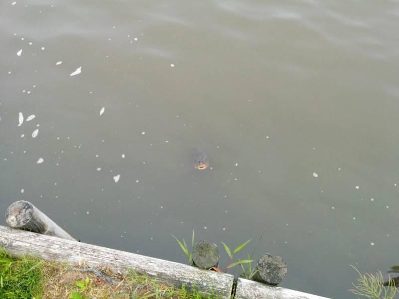 釧路 春採湖1