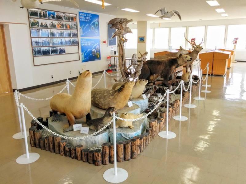 納沙布岬望郷の家 2F動物たち