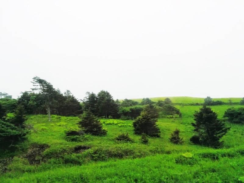 釧路 根室 厚岸 根室間の湿原12