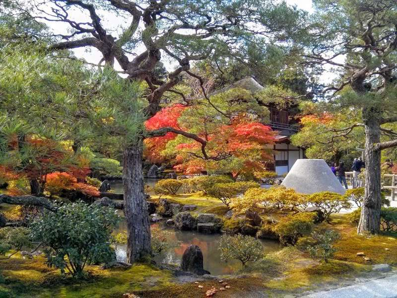銀閣寺 庭園内の木々1