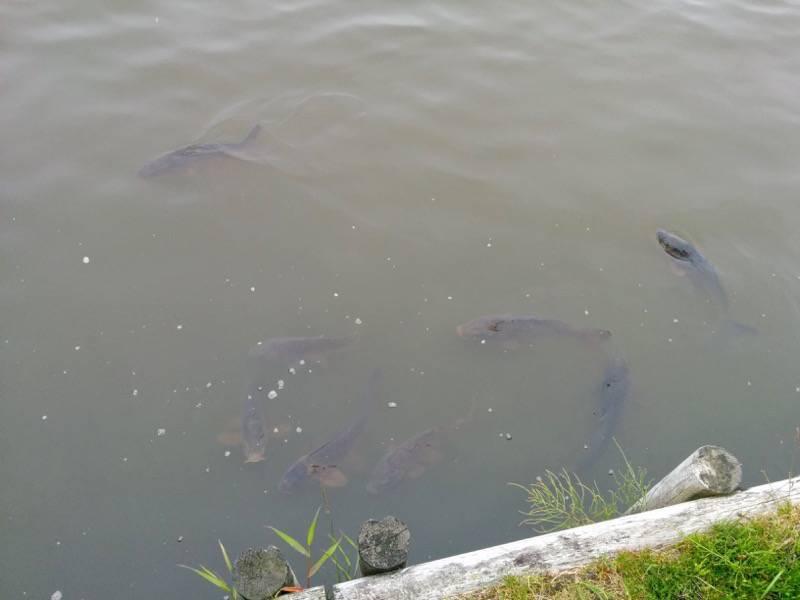 釧路 春採湖3