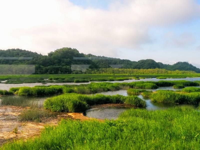 釧路 根室 厚岸湖8