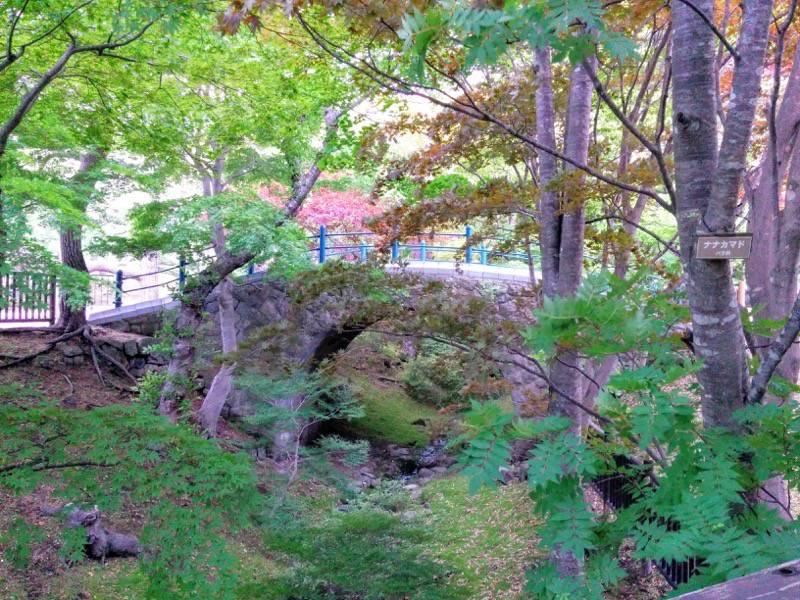 函館公園 園内歩道11