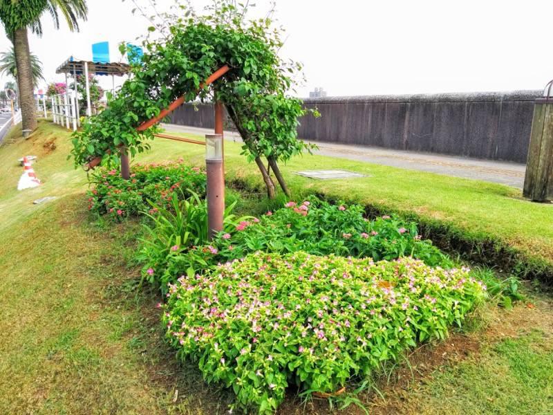 橘公園 花5