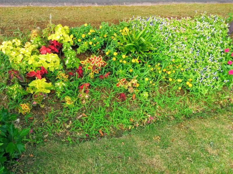 橘公園 花4