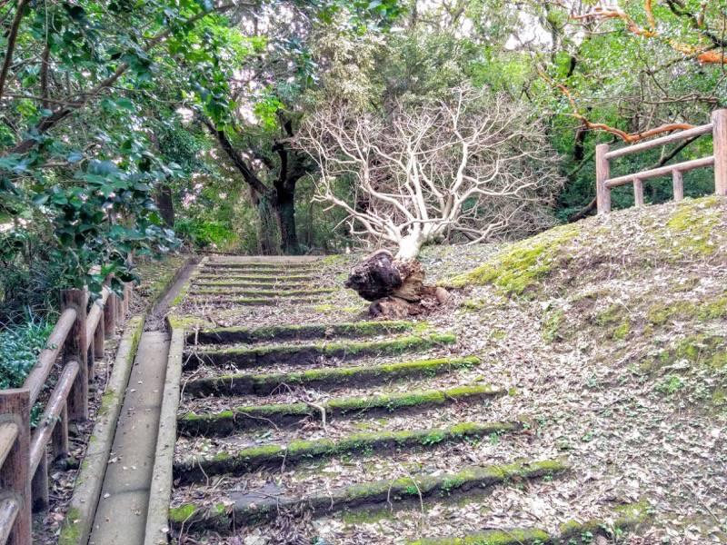 東福寺城跡6