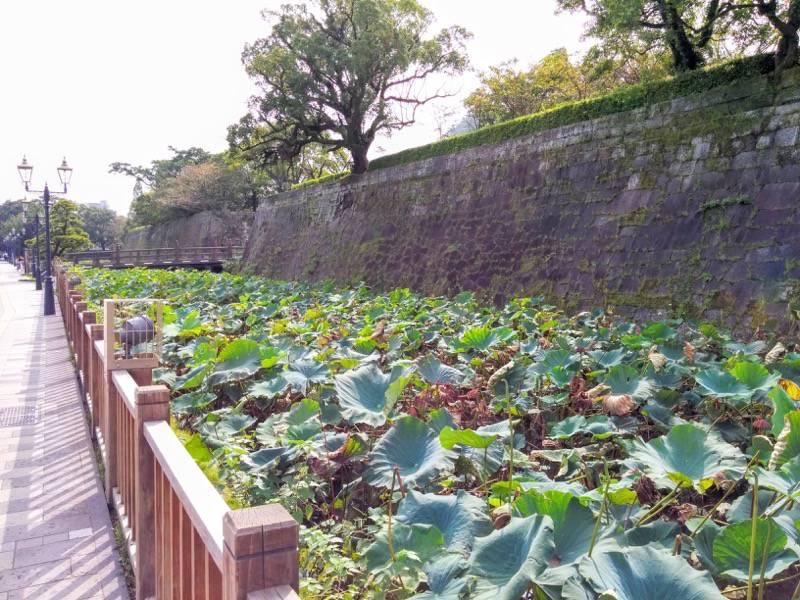 鶴丸城 鹿児島城 石垣3