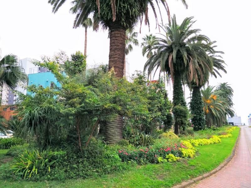 橘公園 公園の付近