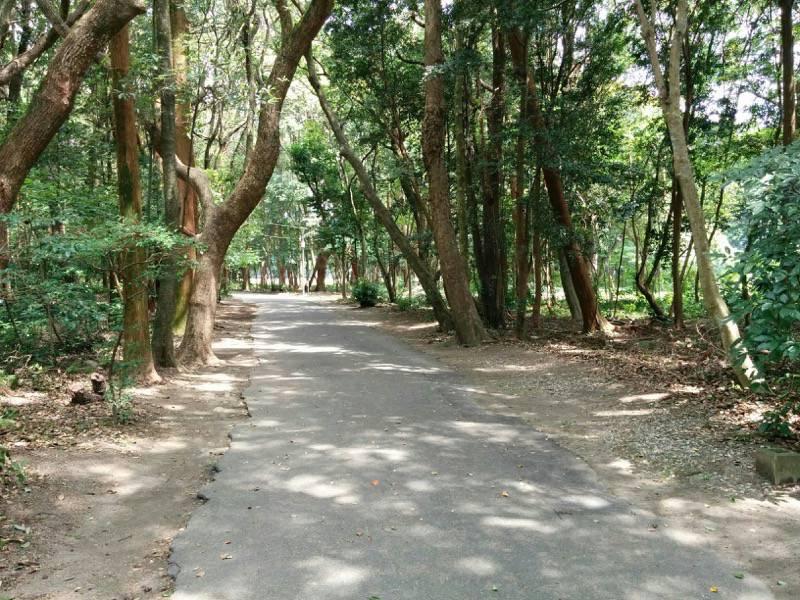 宮崎神宮 東側の道