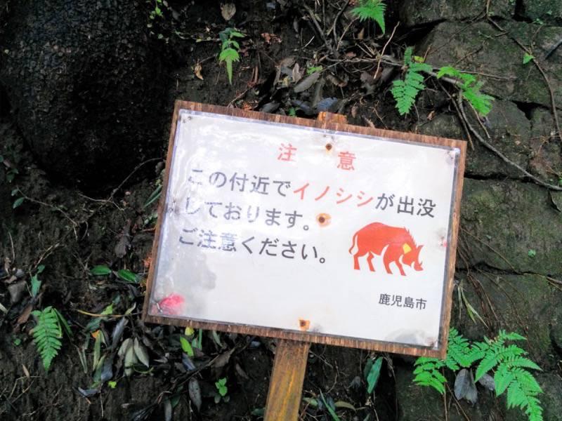 東福寺城跡22イノシシ注意