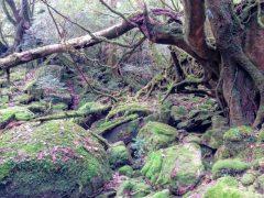苔むすの森