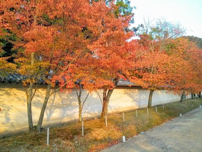 醍醐寺 西大門前の参道の紅葉3