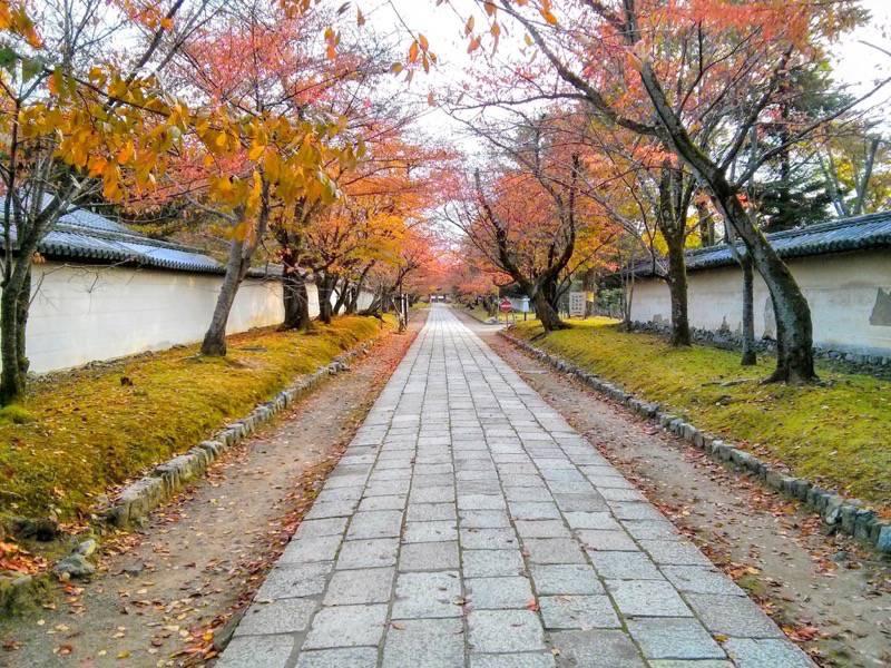 醍醐寺 霊宝館前の参道の紅葉