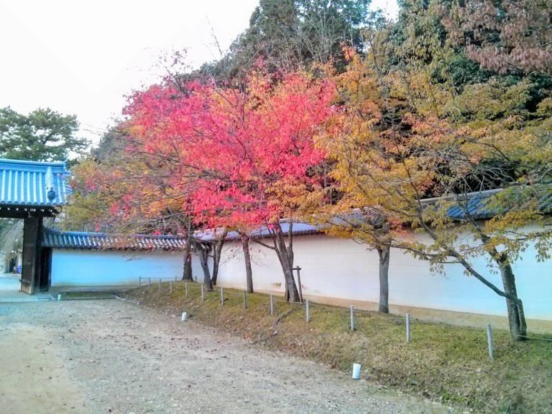 醍醐寺 総門付近の紅葉