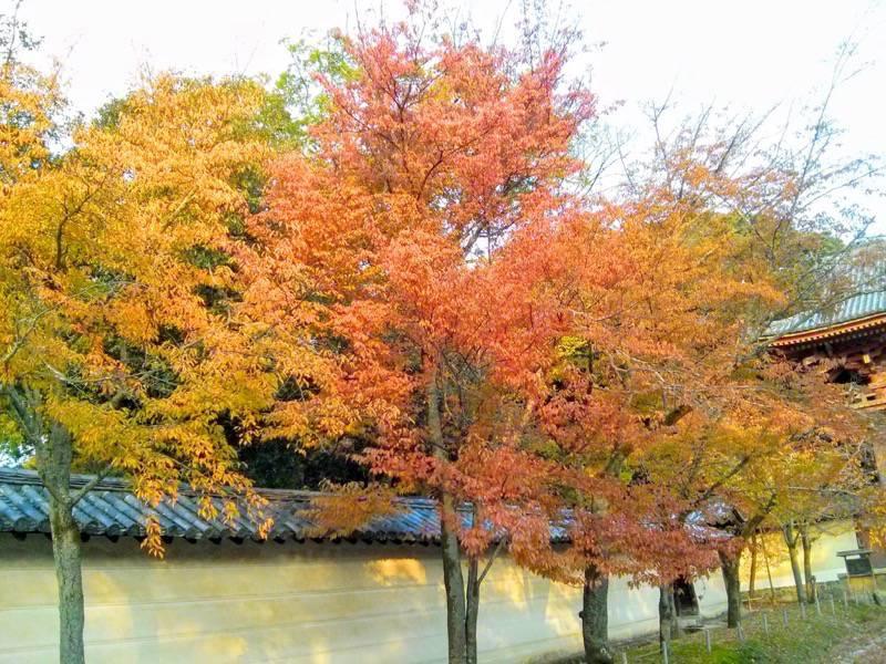 醍醐寺 西大門前の参道の紅葉4