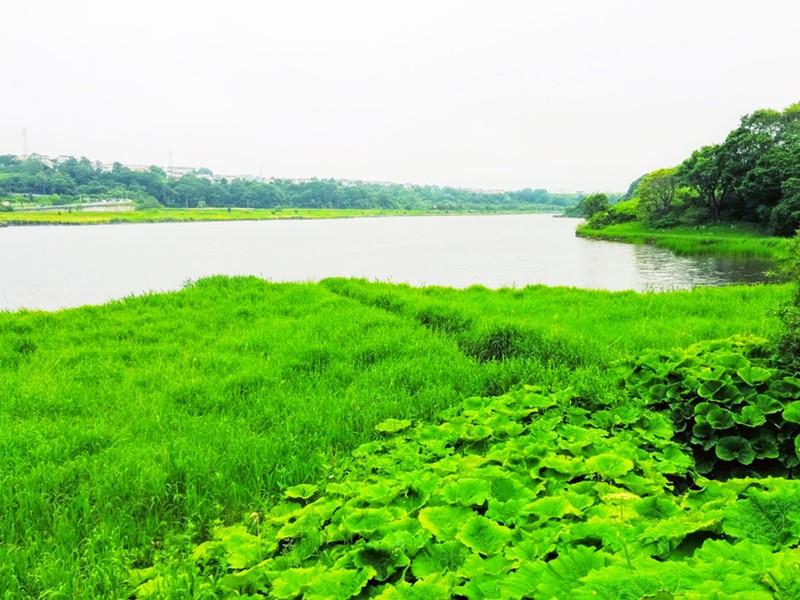 春採湖01
