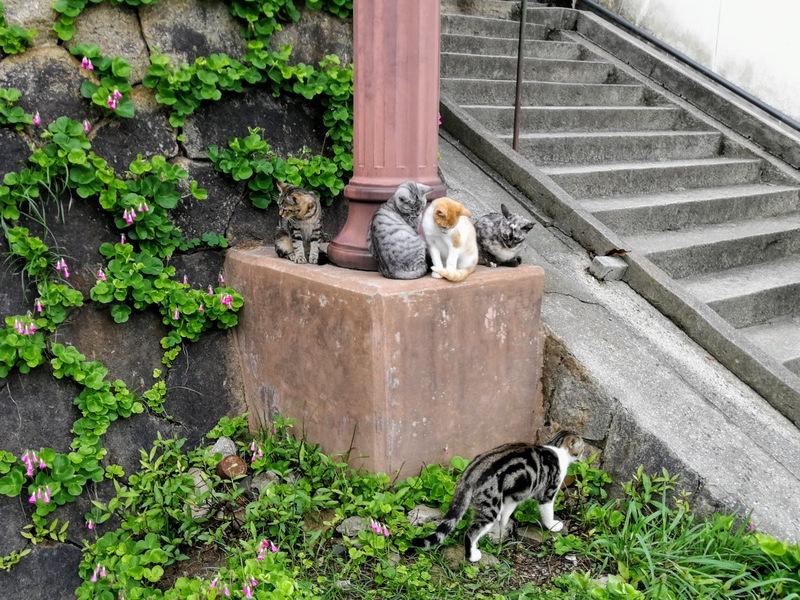32尾道の街並み猫