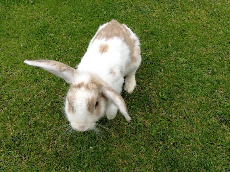 06ウサギ